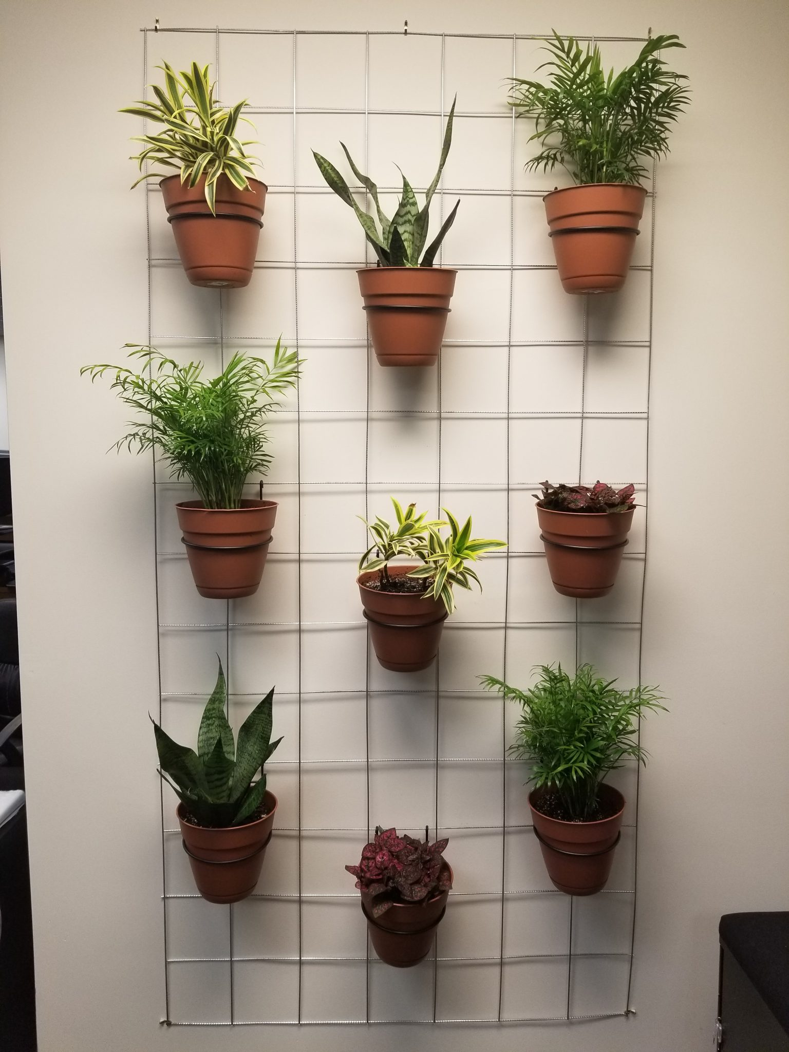 "I've been on a journey these last few months to green our office – literally-- by building and testing a version of a living plant wall in the SBC office. Back in 2018, our team realized that all of the nature in our office was hung up in 2D picture frames on the wall and, as sustainability professionals, we wanted more of a connection to nature in our daily lives. Naturally, I accepted the challenge to ""green up"" our office without breaking the bank on expensive (though beautiful) living plant walls. Here's how to add some healthy greenery to your office on a budget:"
